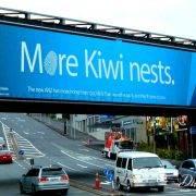 0000001-ANZ-more-Kiwi-nests-CU-2